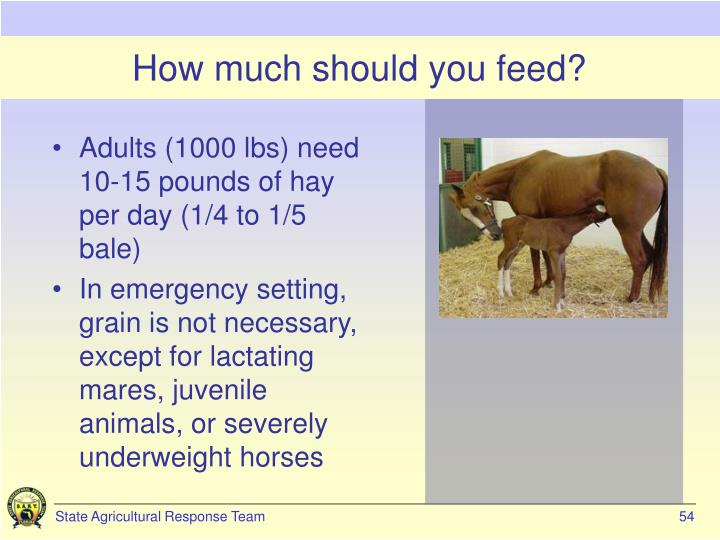 How much should you feed?