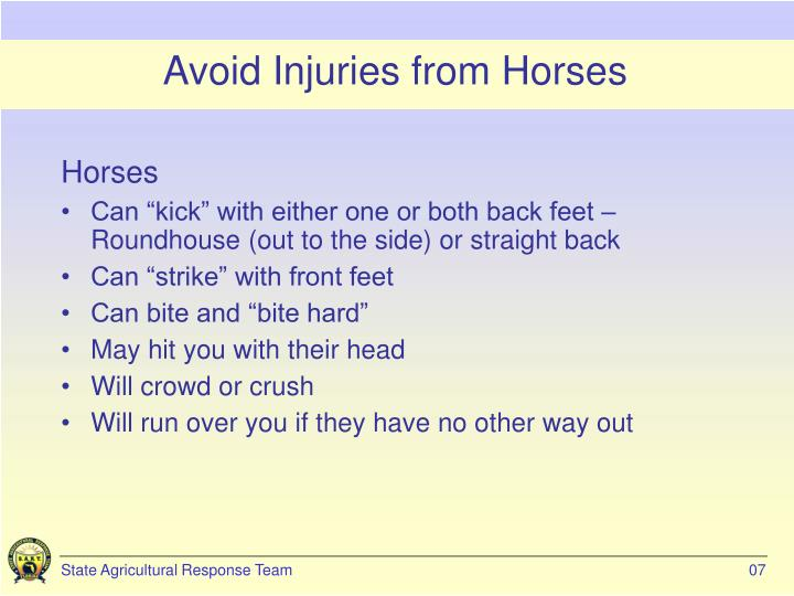 Avoid Injuries from Horses
