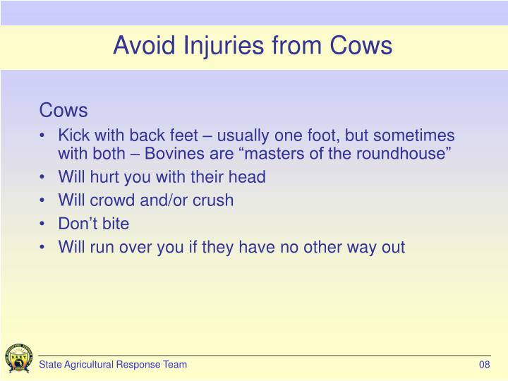 Avoid Injuries from Cows