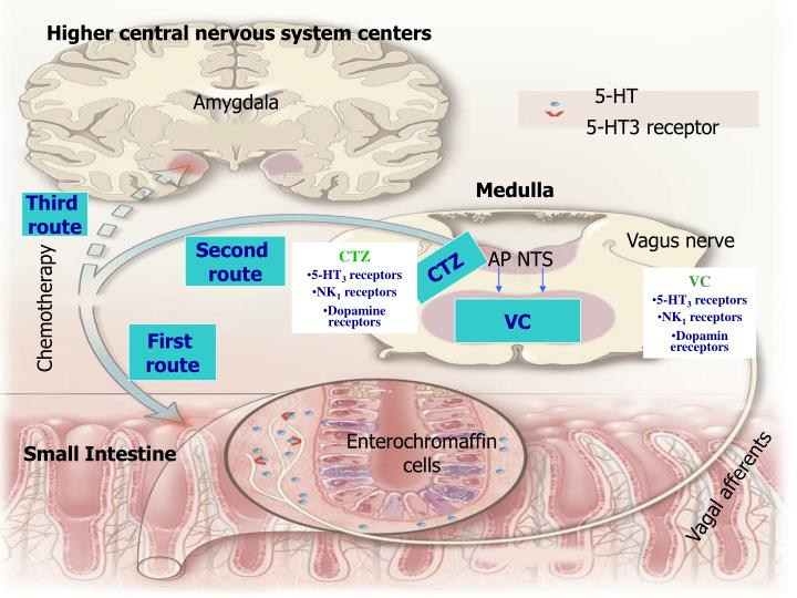 Higher central nervous system centers