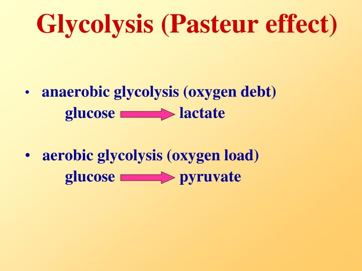 Glycolysis (Pasteur effect)