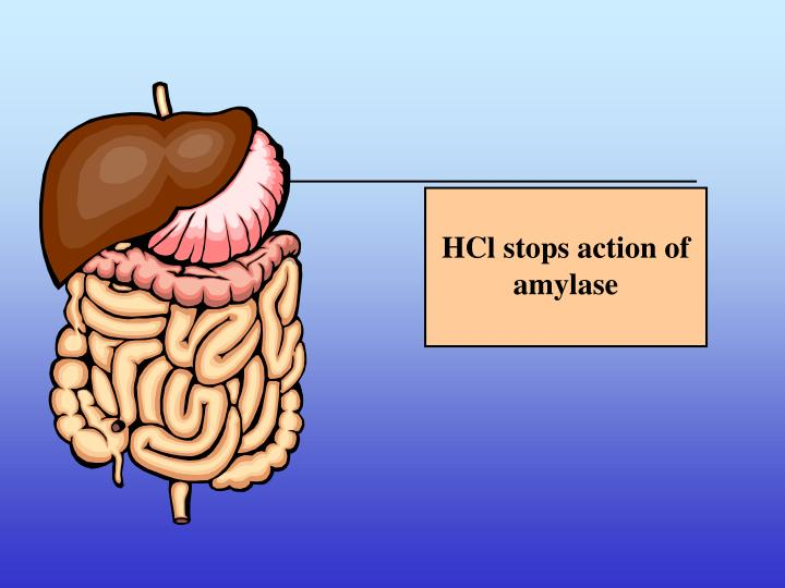 HCl stops action of amylase