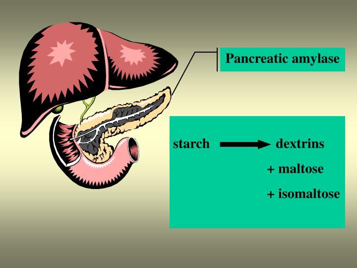 Pancreatic amylase