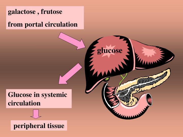 galactose , frutose