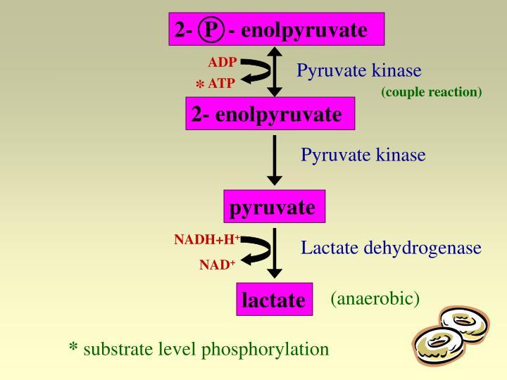 2-  P  - enolpyruvate