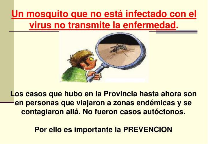 Un mosquito que no está infectado con el virus no transmite la enfermedad