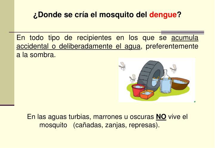 ¿Donde se cría el mosquito del