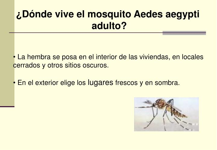 ¿Dónde vive el mosquito Aedes aegypti