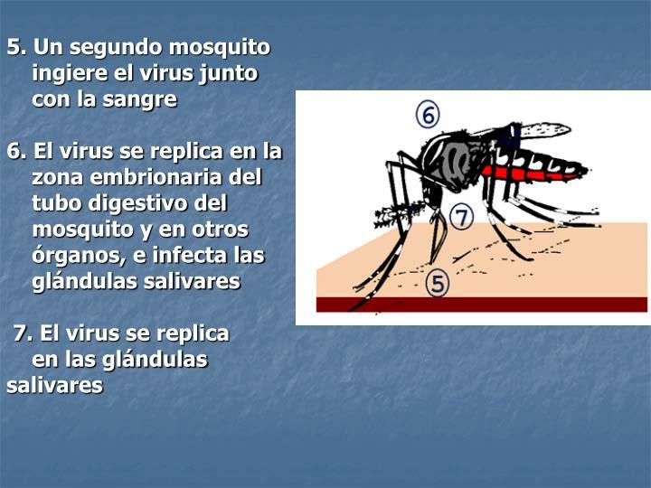 5. Un segundo mosquito
