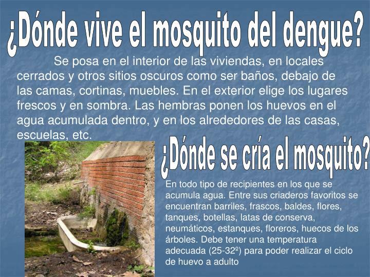 ¿Dónde vive el mosquito del dengue?