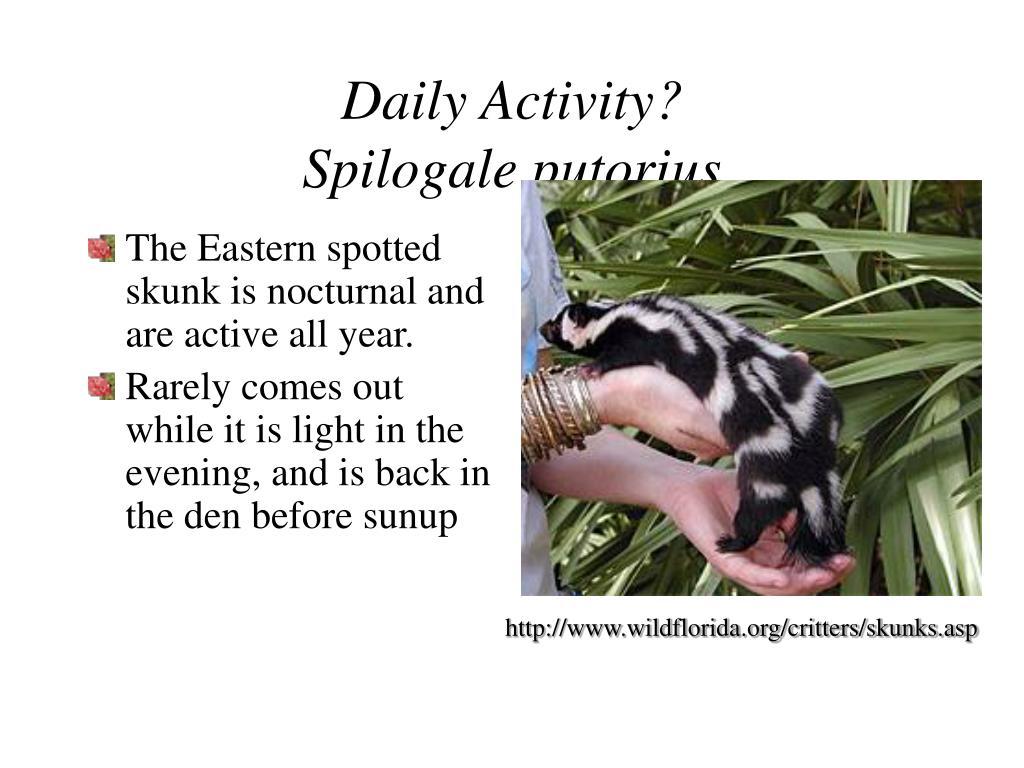 Daily Activity?
