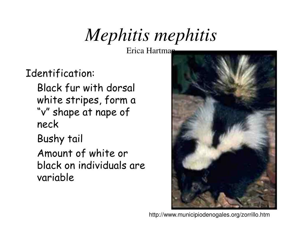Identification: