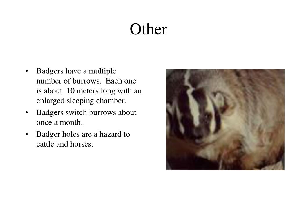 Badgers have a multiple number of burrows.  Each one is about  10 meters long with an enlarged sleeping chamber.