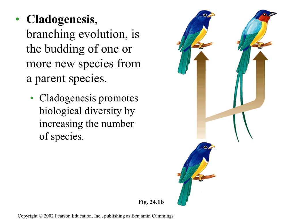 Cladogenesis