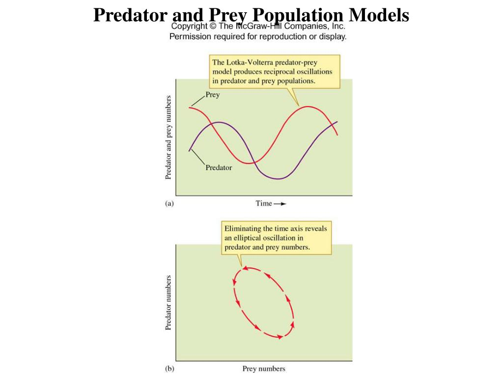 Predator and Prey Population Models