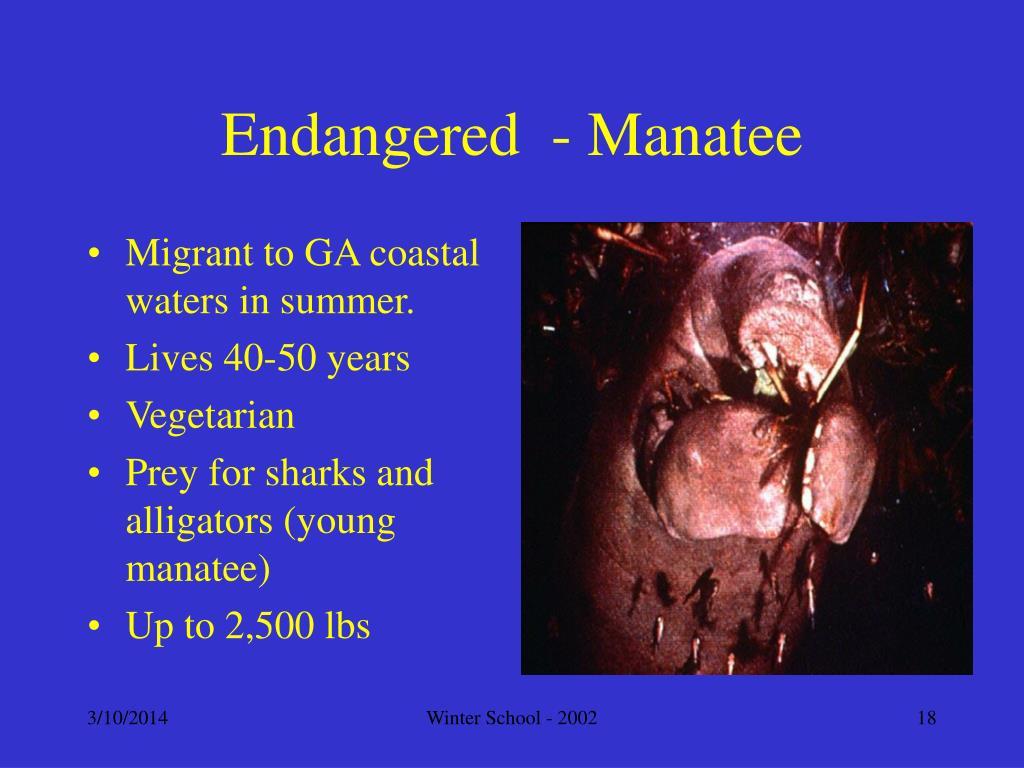 Endangered  - Manatee
