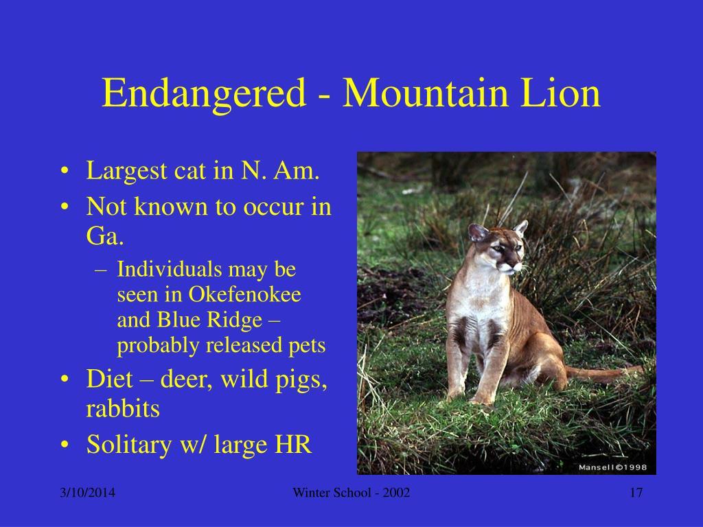 Endangered - Mountain Lion