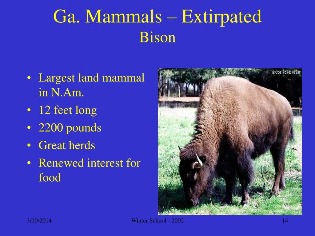 Ga. Mammals – Extirpated