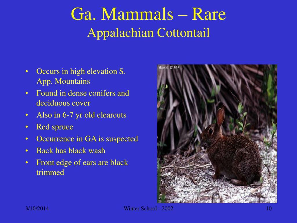 Ga. Mammals – Rare