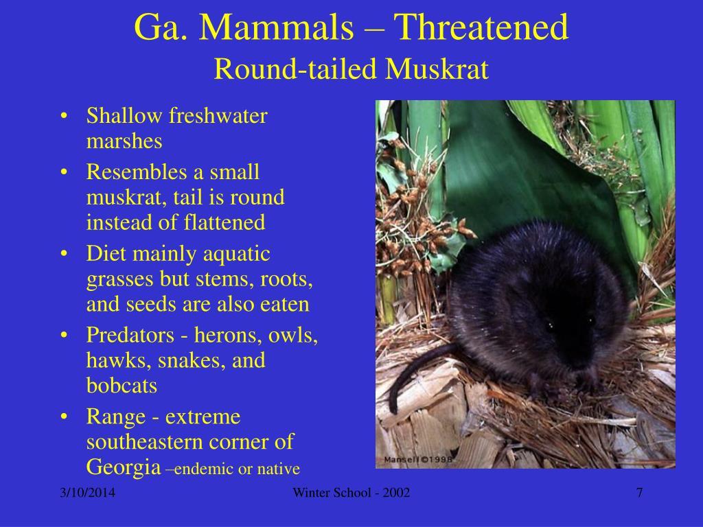 Ga. Mammals – Threatened