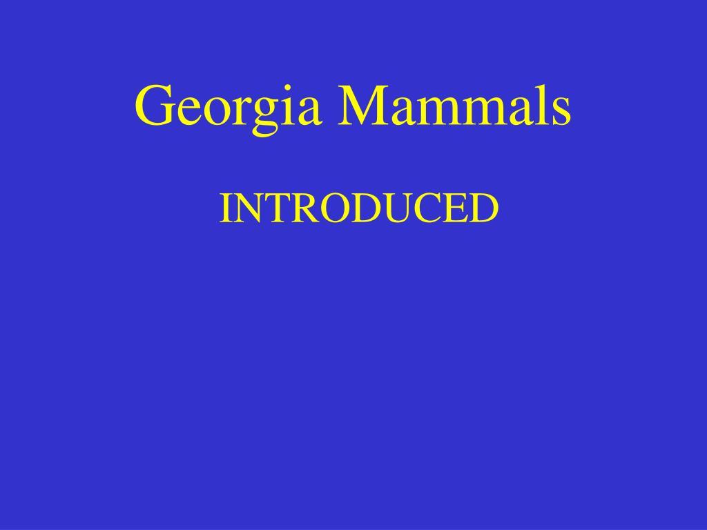 Georgia Mammals
