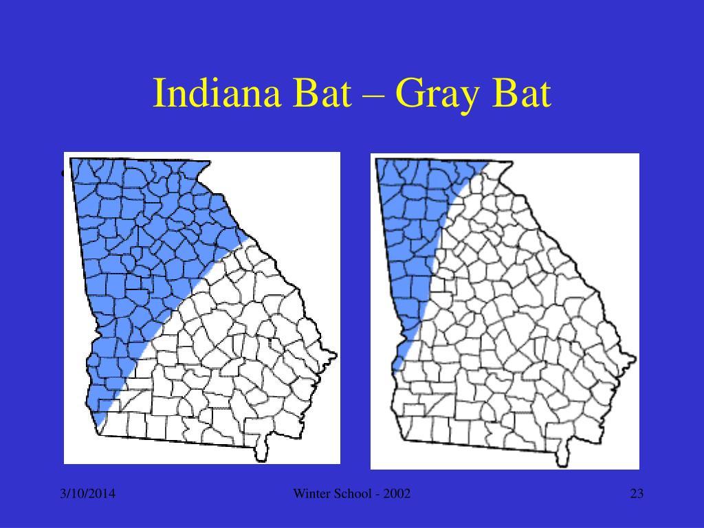 Indiana Bat – Gray Bat