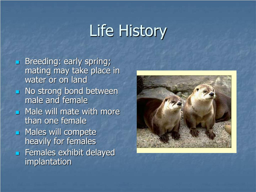 Breeding: early spring; mating may take place in water or on land