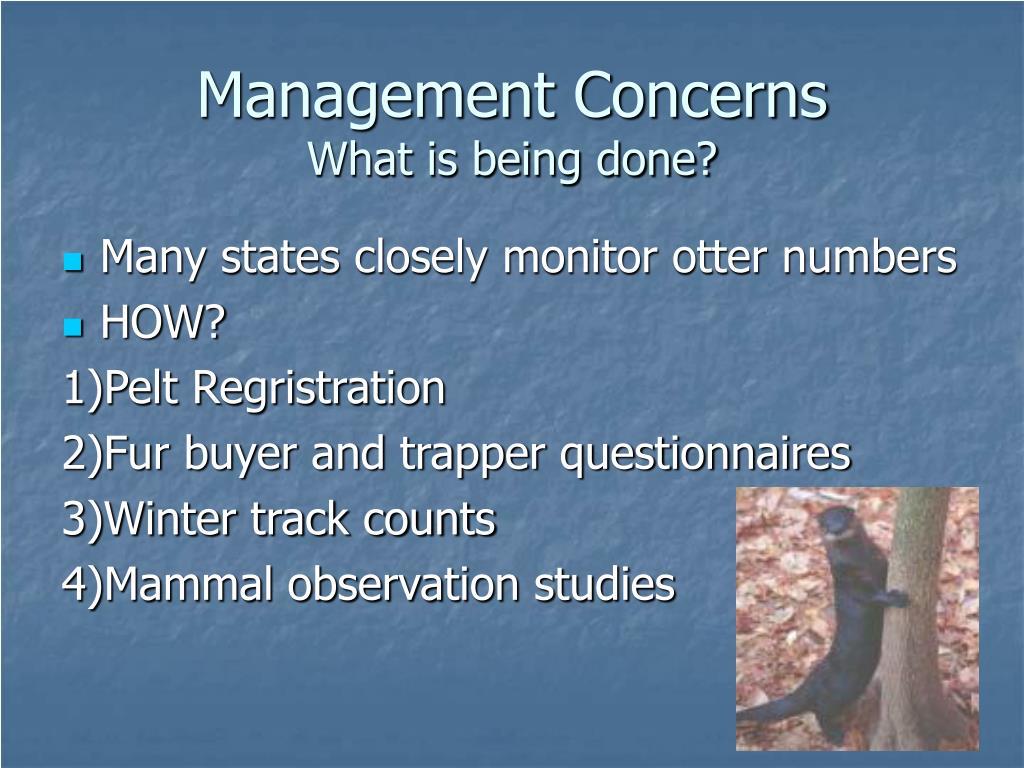 Management Concerns