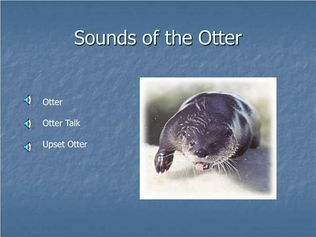 otter oriental small clawed otter congo clawless otter sea otter ... Otter Sounds