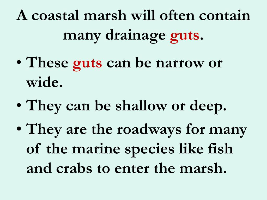 A coastal marsh will often contain many drainage