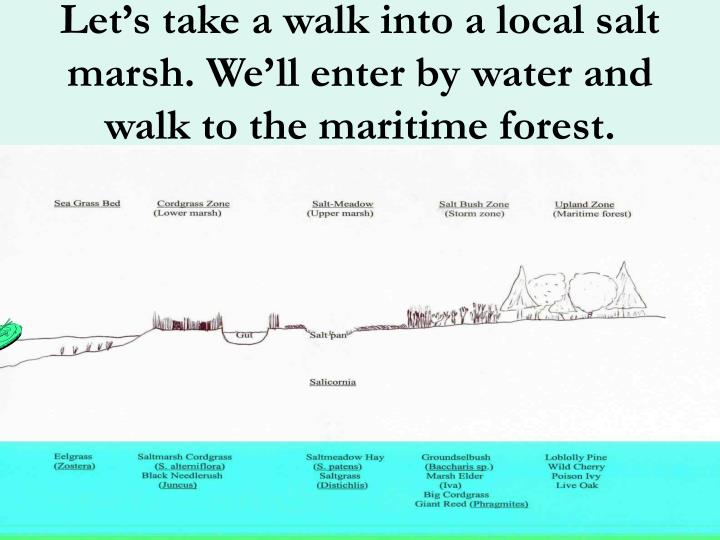 Let s take a walk into a local salt marsh we ll enter by water and walk to the maritime forest