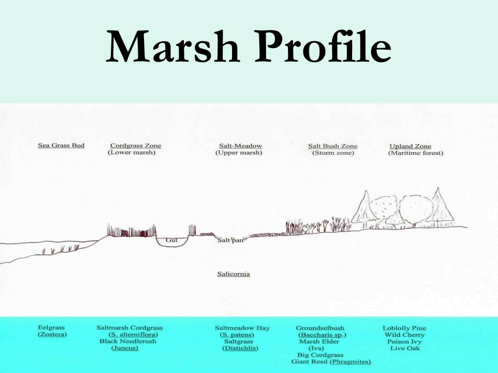 Marsh Profile