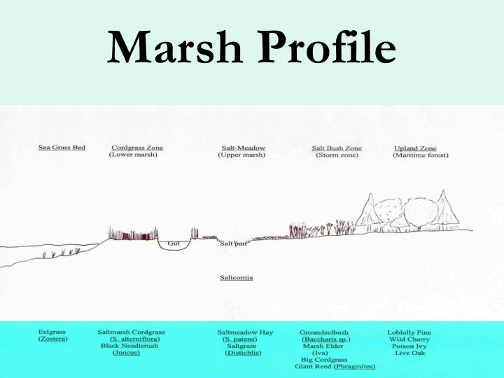 Marsh profile