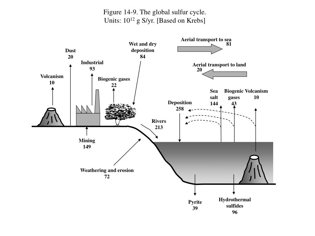 Figure 14-9. The global sulfur cycle.