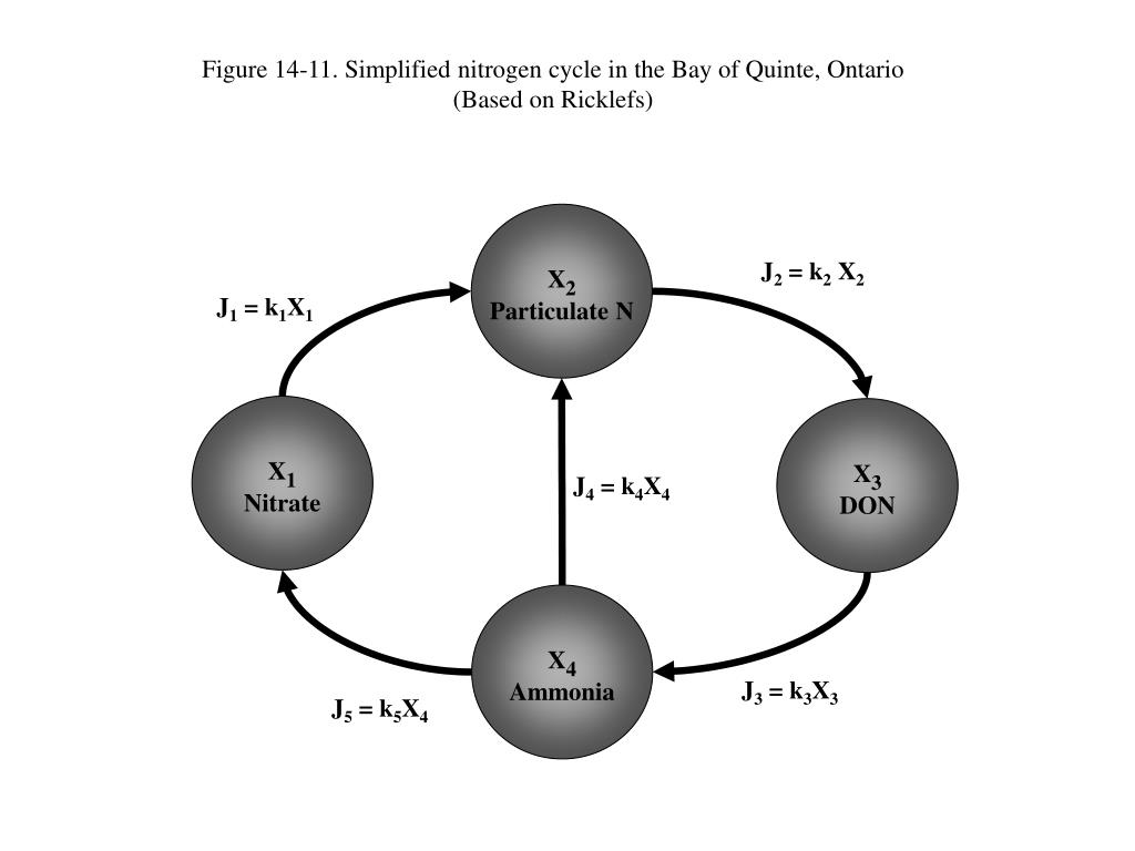 Figure 14-11. Simplified nitrogen cycle in the Bay of Quinte, Ontario