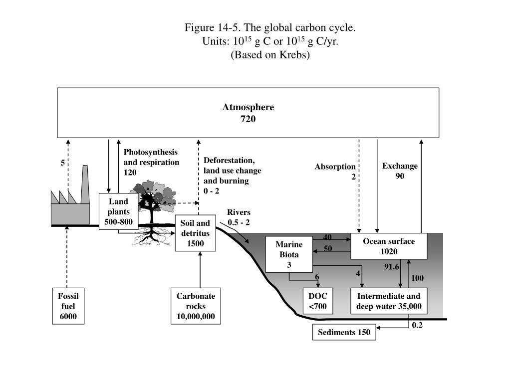 Figure 14-5. The global carbon cycle.