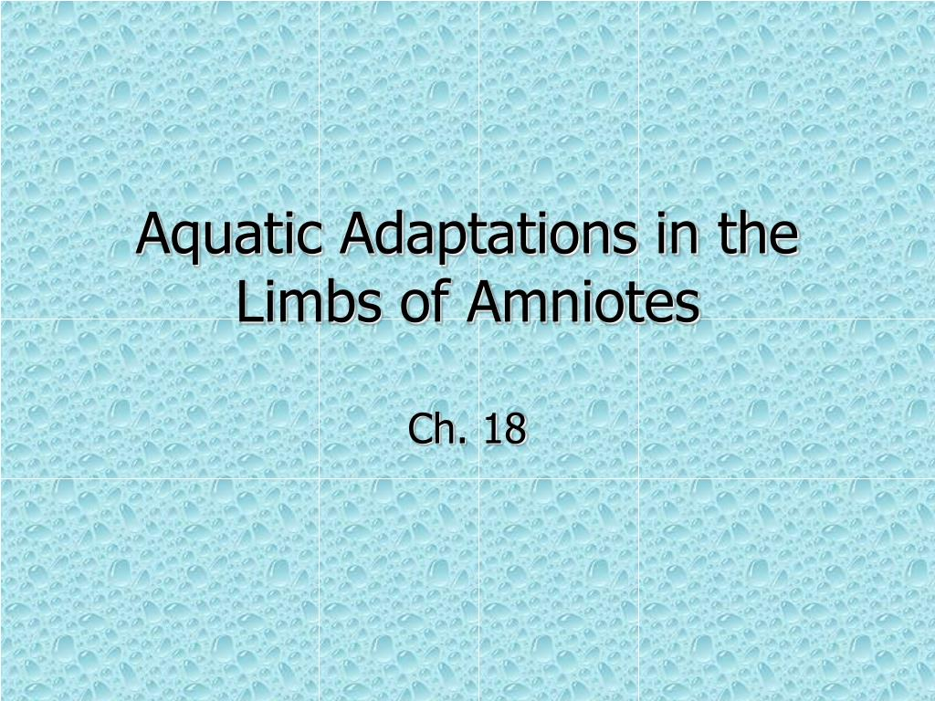 Aquatic Adaptations in the Limbs of Amniotes