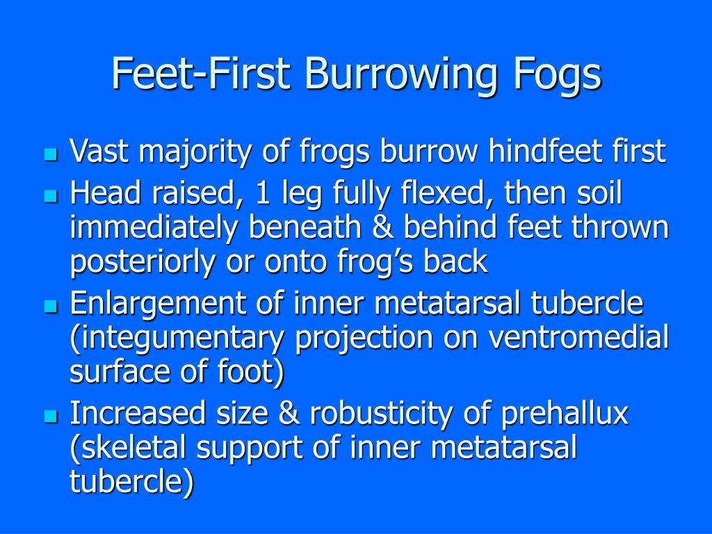 Feet-First Burrowing Fogs