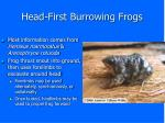 head first burrowing frogs