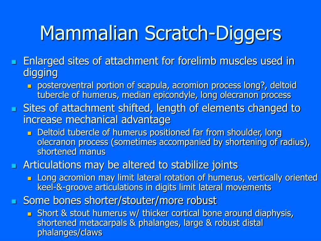 Mammalian Scratch-Diggers