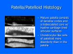 patella patelloid histology