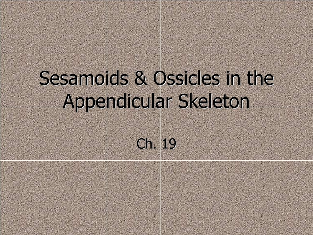 Sesamoids & Ossicles in the Appendicular Skeleton