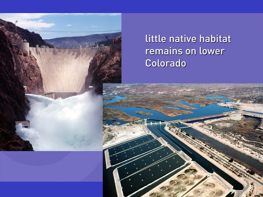 little native habitat remains on lower Colorado