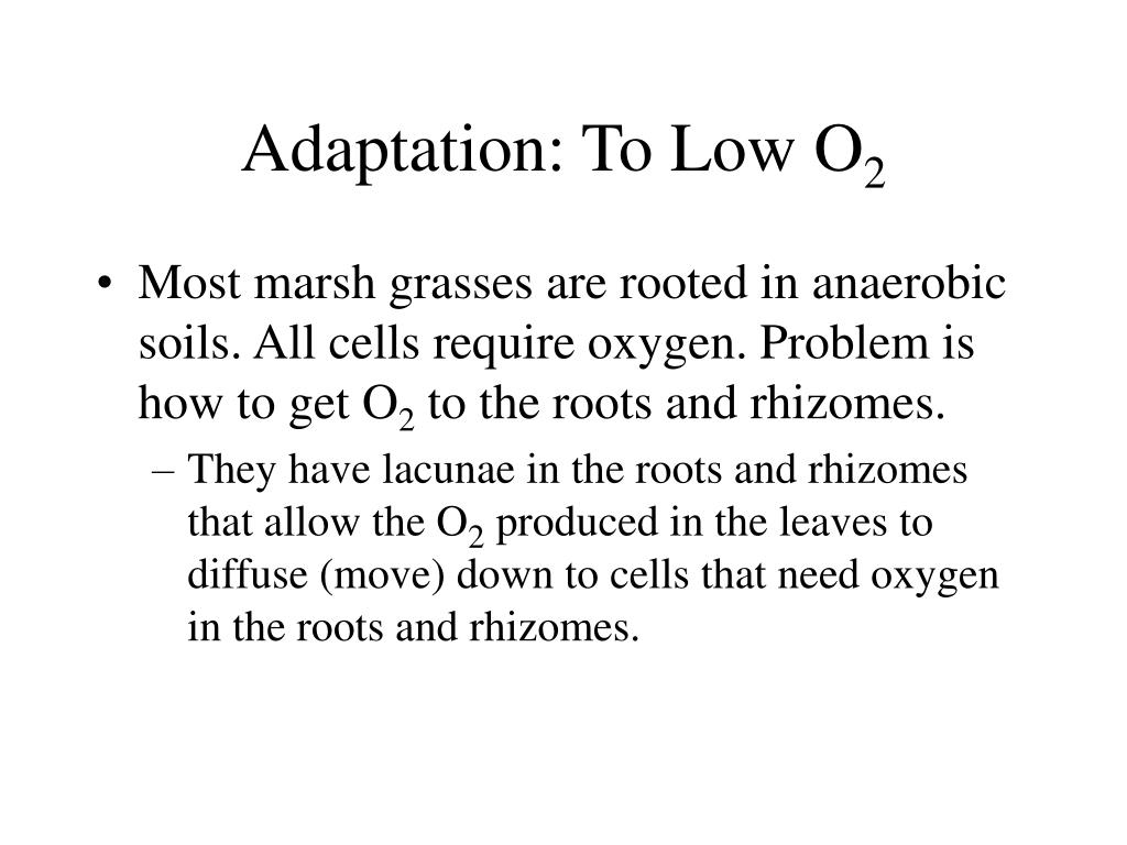 Adaptation: To Low O