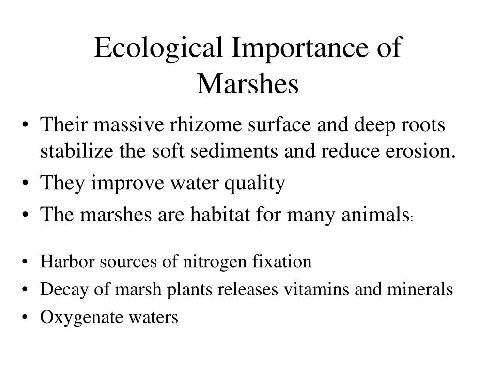 Ecological Importance of Marshes