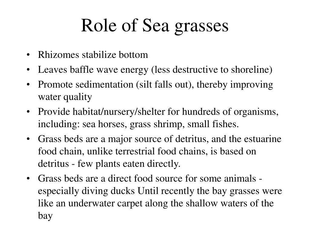 Role of Sea grasses