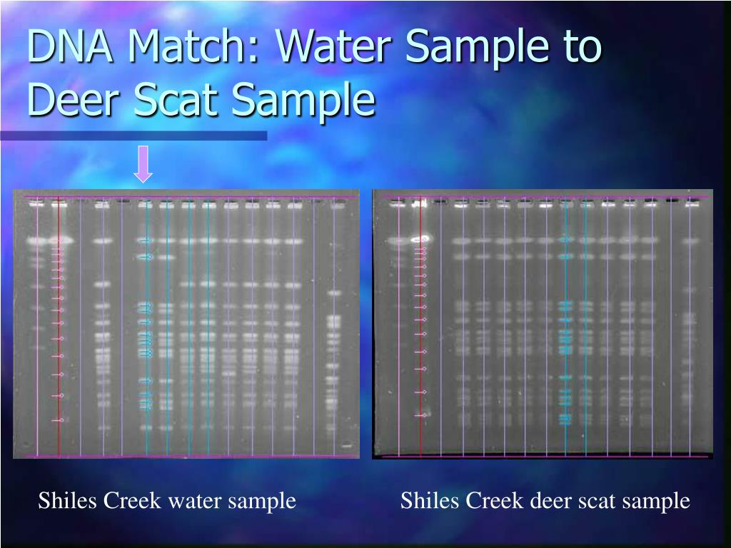 DNA Match: Water Sample to Deer Scat Sample