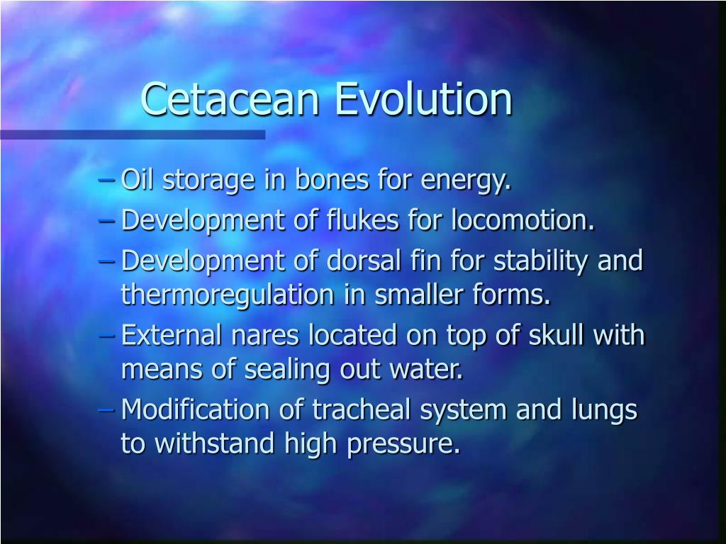 Cetacean Evolution