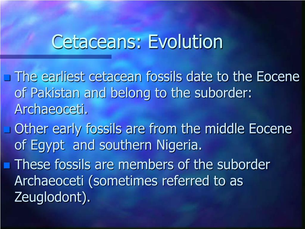 Cetaceans: Evolution