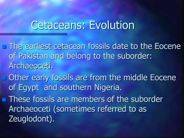 Cetaceans evolution